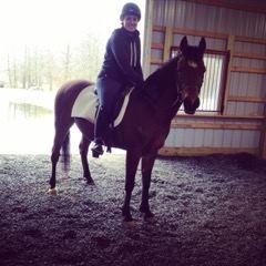 Equestrian Mulch