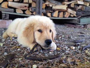 Is Rubber Mulch Safe for Pets